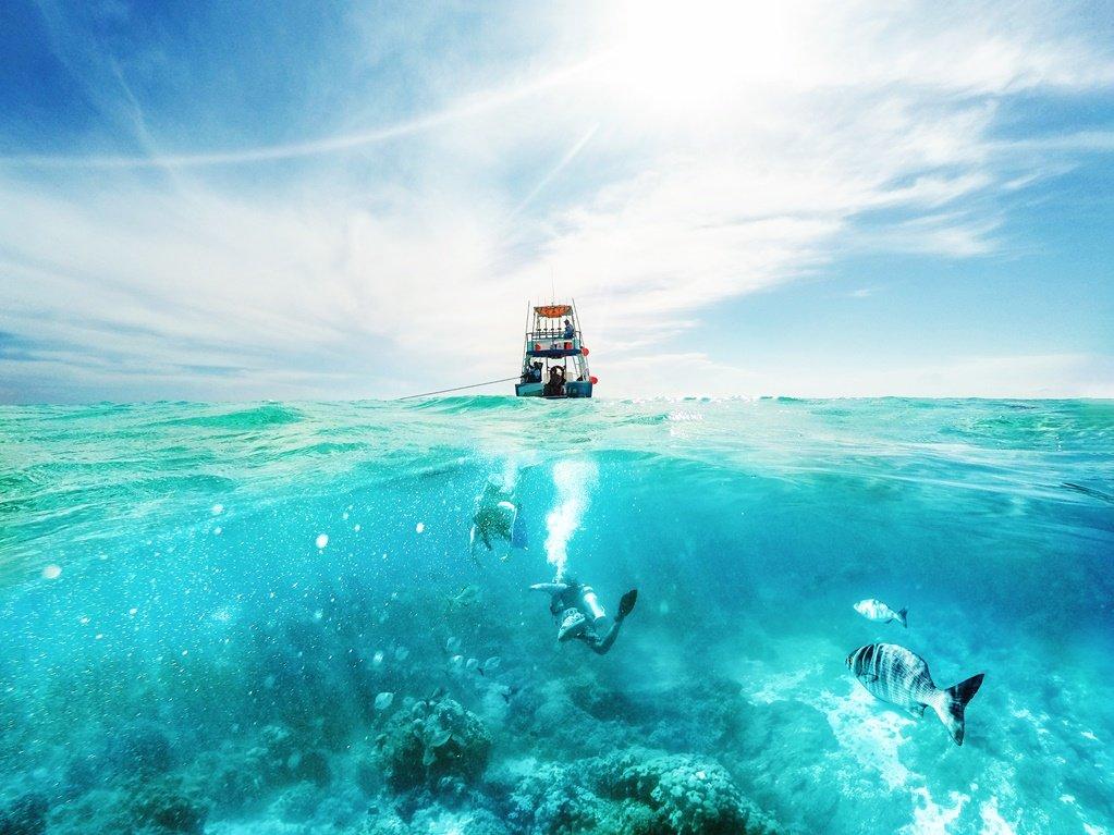 Snorkel y buceo en Cozumel